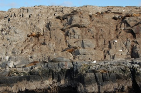 ushuaia - catamarã (2)