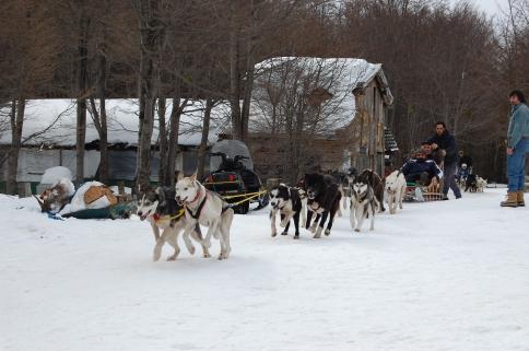 A saída para o passeio com trenó de cachorrios