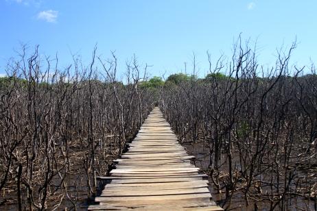 O mangue de Playa Avellana